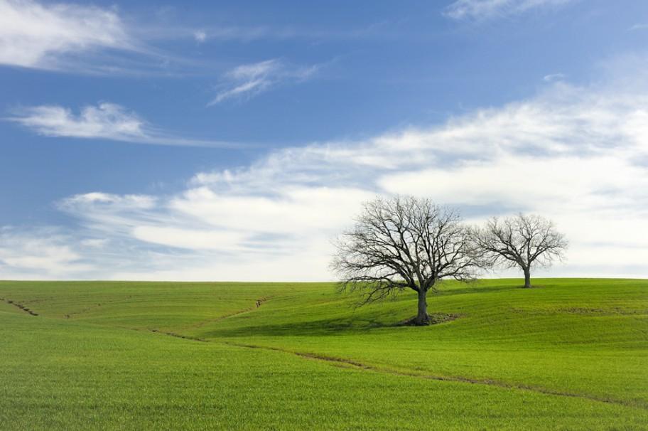 青空と自然