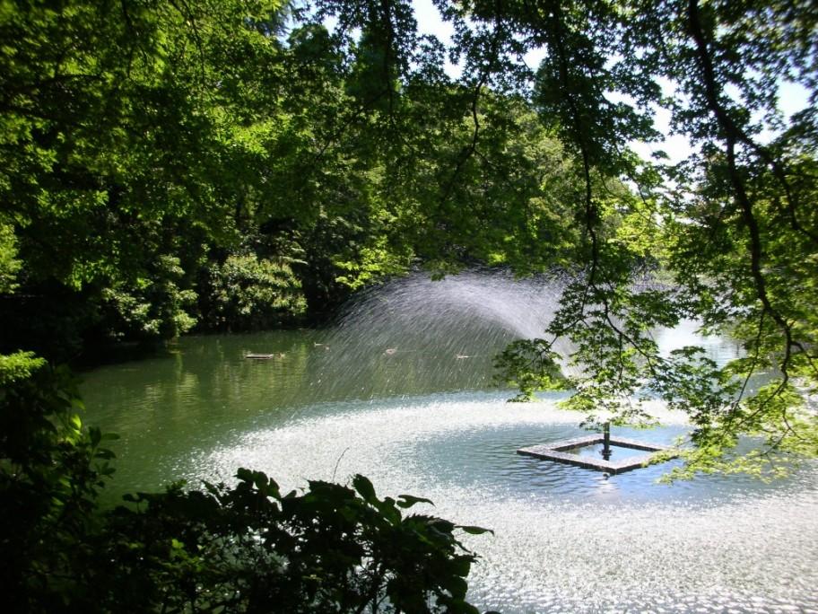 井の頭公園 池