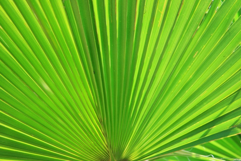 fan-palm-283152_960_7201